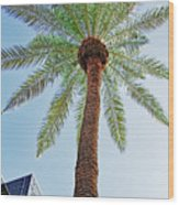 Date Palm In The City Wood Print