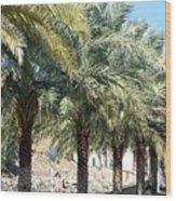 Date Palms Wood Print