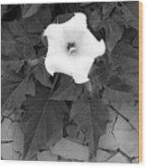 Datura Wood Print