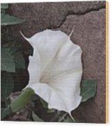 Datura. Flower Wood Print