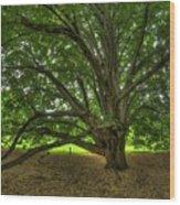 Dawes Arboretum Wood Print