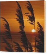 Dawn Grasses Wood Print
