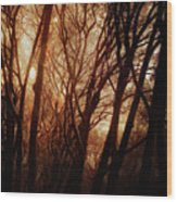 Dawn In The Trees Wood Print