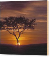 Dawn On The Masai Mara Wood Print