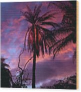 Dawn Palm 03 Wood Print
