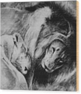 Dawn's A Coming Open Your Eyes - Lions Wood Print