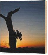 Dawn's Glory Wood Print