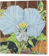 Day Flower Wood Print