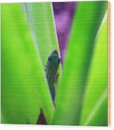 Day Gecko And Pineapple Plant Wood Print