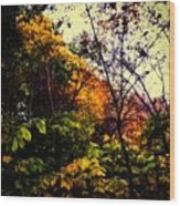Day In The Woods  Wood Print