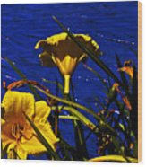 Day Lilies By The Water Wood Print