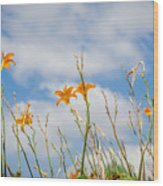 Day Lilies Look To The Sky Wood Print