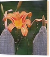 Day Lilly Fenced In Wood Print
