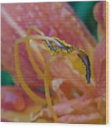 Day Lilly Stamens 1a Wood Print