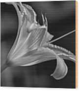 Day Lily 2 Bw Wood Print