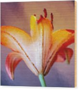 Day Lily Back Wood Print