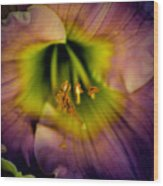 Day Lily In Purple Wood Print