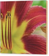 Day Lily Macro Wood Print