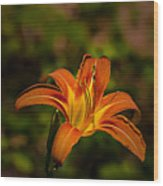Day Lily Wood Print
