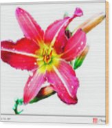 Day Lily No 2 Wood Print