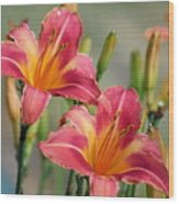 Day Lily Twins Wood Print