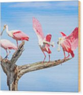 Day Of The Spoonbill  Wood Print