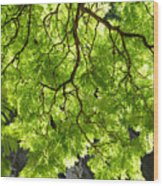 Daydream Wood Print