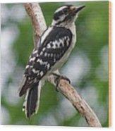 Daydreaming Downy Woodpecker Wood Print