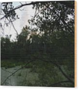 Daylight In The Swamp Wood Print