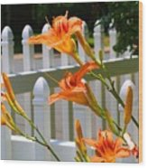 Daylilies On Picket Fence Wood Print
