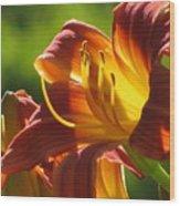 Dayliliy Wood Print