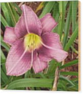 Daylilly Wood Print