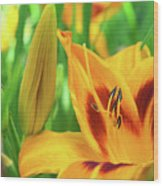 Daylily Bud And Bloom Wood Print