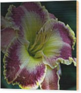 Daylily Collection # 13 Wood Print