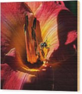 Daylily Collection # 19 Wood Print