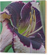 Daylily Collection #12 Wood Print