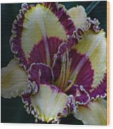 Daylily Collection #9 Wood Print