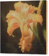Daylily Dream Wood Print