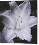 Daylily Flower With A Tint Of Purple Wood Print