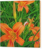 Daylily Greeting Wood Print by Guy Ricketts