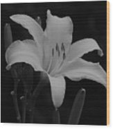Daylily In Black And White Wood Print