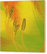 Daylily In Morning Light Wood Print
