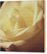Days Of Creamy Rose Wood Print