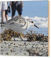 Daytona Beach Surf 001 Wood Print