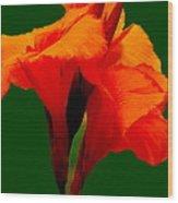 Dazzle Bouquet Wood Print