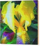 Dazzle In The Garden Sun Wood Print