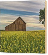 Dazzling Canola In Bloom Wood Print