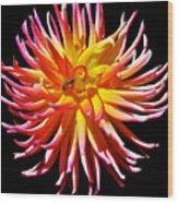 Dazzling Dahliia Wood Print