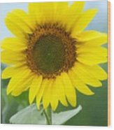Dazzling Sunflower Wood Print