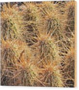 Dbg Cactus II Wood Print